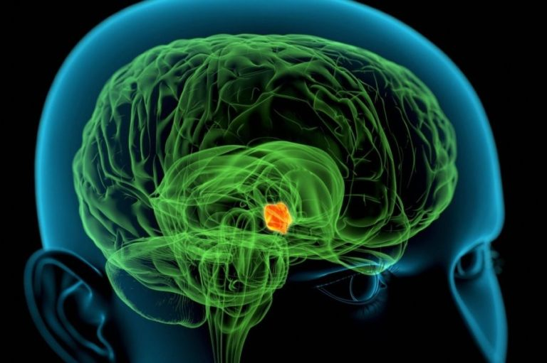 Σημαντική ανακάλυψη για τον «εγκεφαλικό» έλεγχο της όρεξης